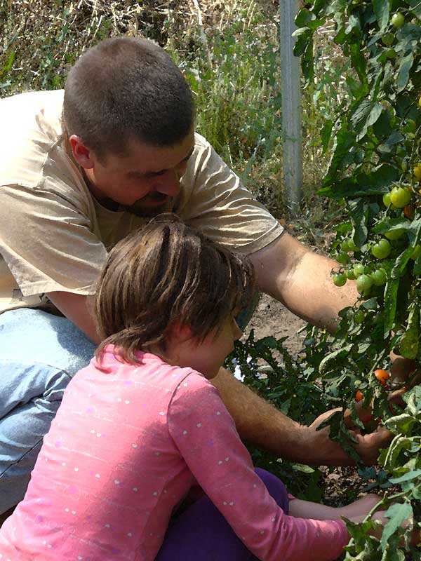 Steve and Annabelle examine new tomatoes: Plow Maker Farms
