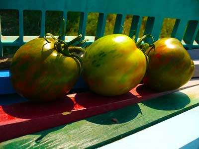 Plow Maker Farms: Black and Brown Boar Tomatoes